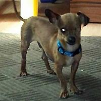 Adopt A Pet :: Ronnie - Sumter, SC