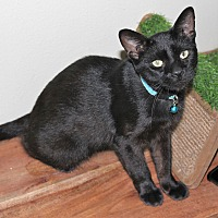 Adopt A Pet :: Sugar - Cuero, TX