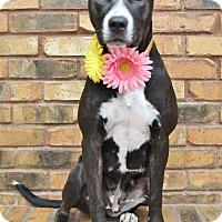 Adopt A Pet :: Mallory - Benbrook, TX