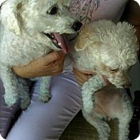 Adopt A Pet :: Bilbo and Chica - Mesa, AZ