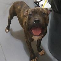 Adopt A Pet :: 17-09-2885b James - Dallas, GA