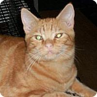 Domestic Shorthair Cat for adoption in Watsontown, Pennsylvania - Jaden