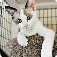 Adopt A Pet :: Sumita - Bradenton, FL