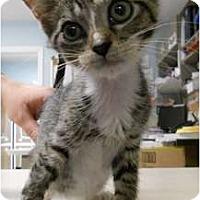 Adopt A Pet :: Dagg - Maywood, NJ