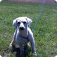Adopt A Pet :: Lucky - Donaldsonville, LA