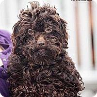 Adopt A Pet :: Branny G - Mt Gretna, PA