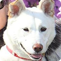 Adopt A Pet :: Samantha - West New York, NJ