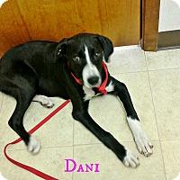 Adopt A Pet :: Dani - Silsbee, TX