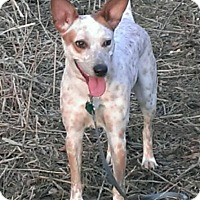 Adopt A Pet :: Miley - Albert Lea, MN