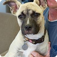 Adopt A Pet :: Hannah Bell - Homewood, AL