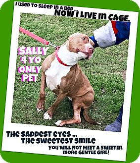Pit Bull Terrier Mix Dog for adoption in Wantagh, New York - Sally