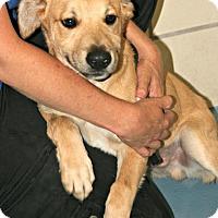 Adopt A Pet :: Linus - Lufkin, TX