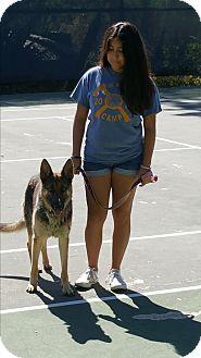 German Shepherd Dog Dog for adoption in El Cajon, California - Sweet German Shepherd