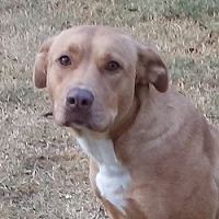 Hound (Unknown Type) Mix Dog for adoption in Glenwood, Georgia - Louise