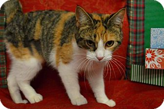 Calico Cat for adoption in Rockwood, Tennessee - ALICE