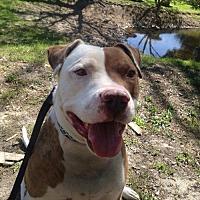 Adopt A Pet :: Jester - Alta Loma, CA