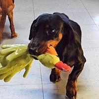 Adopt A Pet :: willie - York, SC