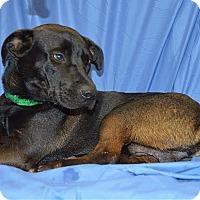 Adopt A Pet :: Charlie - Ahoskie, NC