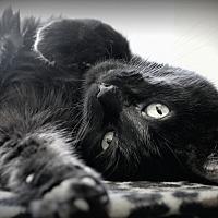 Adopt A Pet :: Leo - Dunkirk, NY