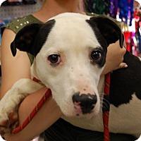 Adopt A Pet :: Heart - Brooklyn, NY