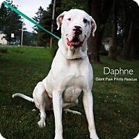Adopt A Pet :: Daphne - Valparaiso, IN
