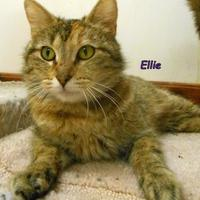 Adopt A Pet :: Ellie - Oskaloosa, IA