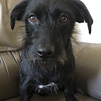 Adopt A Pet :: Delilah - Irvine, CA