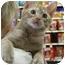 Photo 2 - Domestic Shorthair Cat for adoption in Monroe, Georgia - Willie