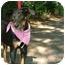 Photo 3 - Labrador Retriever Mix Puppy for adoption in Glastonbury, Connecticut - DeeDee