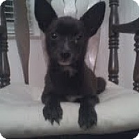 Adopt A Pet :: Buddy - CHESTERFIELD, MI
