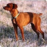Adopt A Pet :: Lucy - Topeka, KS