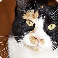 Adopt A Pet :: Kira - Xenia, OH
