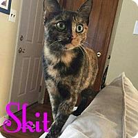 Adopt A Pet :: Skit - New York, NY