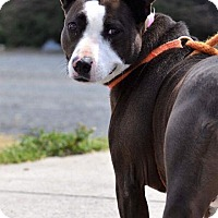 Adopt A Pet :: Emmy - Albemarle, NC