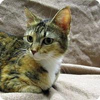 Adopt A Pet :: 17-c03-009 Fern - Fayetteville, TN