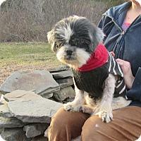 Adopt A Pet :: Winnie - West Warwick, RI