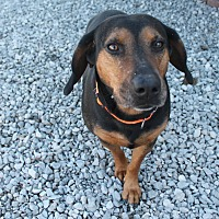Adopt A Pet :: Elvis - Southington, CT