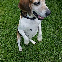 Adopt A Pet :: Petey - cicero, NY