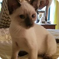 Adopt A Pet :: bailey - New Port Richey, FL