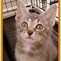 Adopt A Pet :: Lexy - Berkeley Springs, WV