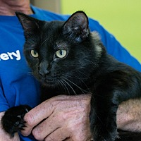 Adopt A Pet :: Bean - Houston, TX
