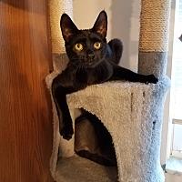Adopt A Pet :: Darryl - Columbus, OH
