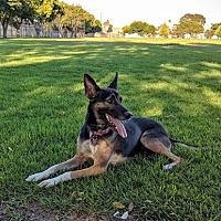 Adopt A Pet :: Heidi - Irvine, CA