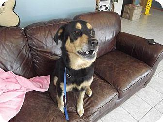 Rottweiler/Labrador Retriever Mix Dog for adoption in Wahoo, Nebraska - Sweetie