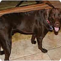 Adopt A Pet :: Bud-E - Gilbert, AZ