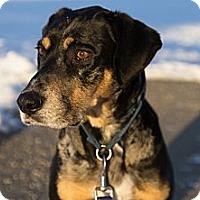 Adopt A Pet :: ALEXA-JJ - Roundup, MT