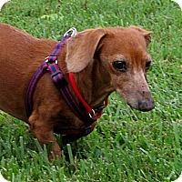 Adopt A Pet :: Wilford - VA - Jacobus, PA