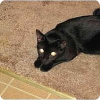 Adopt A Pet :: Maggie - Warren, OH