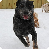 Adopt A Pet :: Lad - Delano, MN