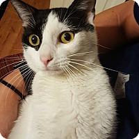 Adopt A Pet :: Buddy - Bentonville, AR